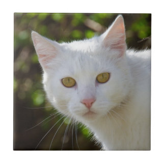 White Cat With Yellow Eyes Tile