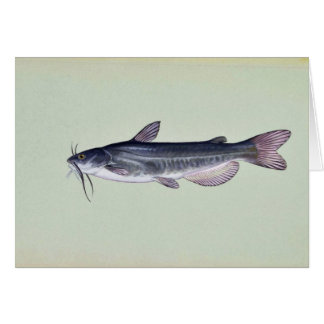 White catfish greeting card