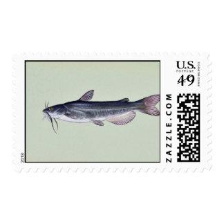 White catfish postage stamp