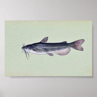 White catfish poster