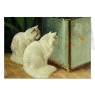 White Cats Watching Goldfish Card