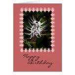 White Cat's Whiskers Flower, Birthday Cards