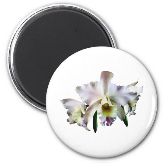 White Cattleya Orchids Magnet