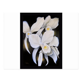 White Cattleya Orchids Painting Postcard