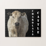 White Charolais Cattle - Western Puzzles