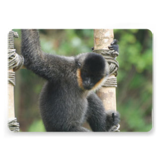 white-cheeked-capuchin-38 invitacion personalizada