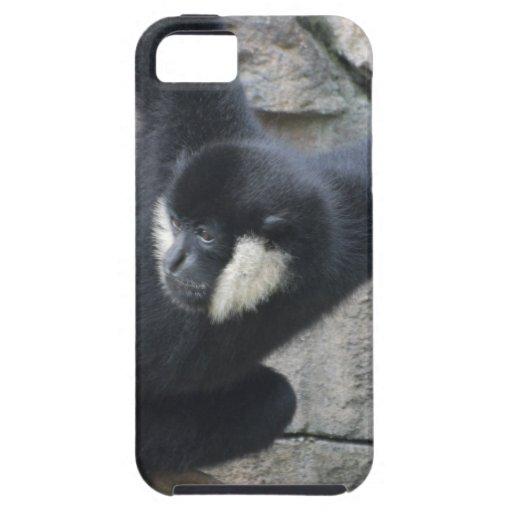 white-cheeked-capuchin-4 iPhone 5 cover