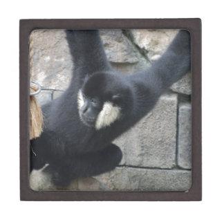 White Cheeked Capuchin Monkey Box Premium Gift Boxes