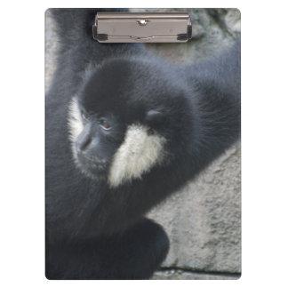 White Cheeked Capuchin Monkey Clipboards