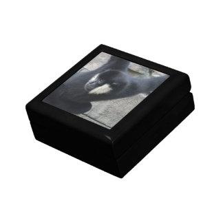 White Cheeked Capuchin Monkey Gift Box