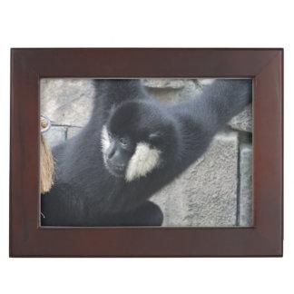 White Cheeked Capuchin Monkey Memory Boxes