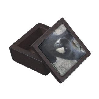White Cheeked Capuchin Monkey Premium Box Premium Jewelry Box