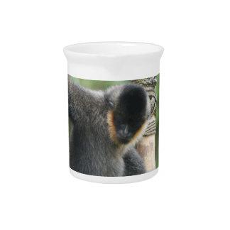 White Cheeked Capuchin Pitcher
