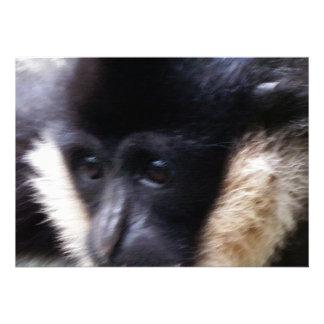 White Cheeked Gibbon Pastel Announcement