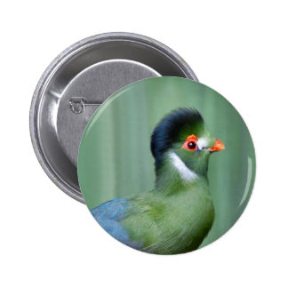 White-Cheeked Turaco Buttons