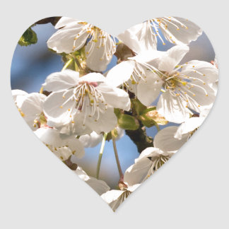 White Cherry bare OM Heart Sticker