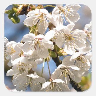 White Cherry bare OM Square Sticker