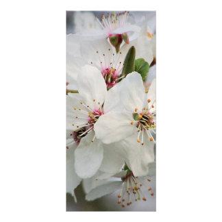 White Cherry Blooms Design Rack Card