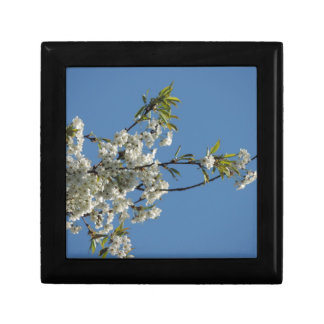 White Cherry blossom and blue sky Jewelry Box