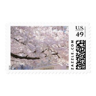 White cherry blossom postage