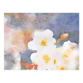 White Cherry Blossoms Digital Watercolor Painting Post Cards