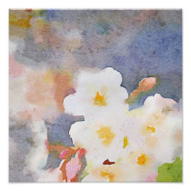 White Cherry Blossoms Digital Watercolor Painting Poster