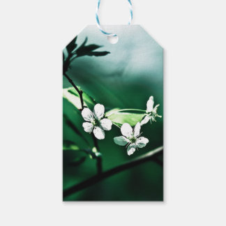 White Cherry Blossoms Gift Tags