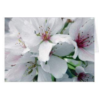 White Cherry Blossoms Photo Card