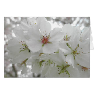 White Cherry Blossoms Photo Greeting Card