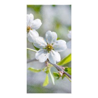 White Cherry Flower Card