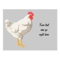 White Chicken Postcard