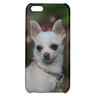 White Chihuahua Case For iPhone 5C