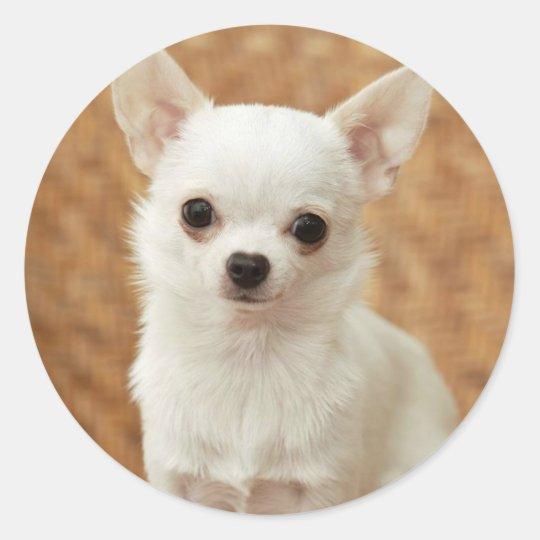White Chihuahua Classic Round Sticker