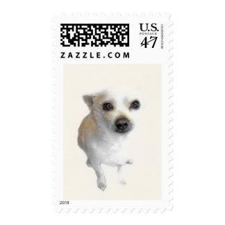 White chihuahua dog postage stamp