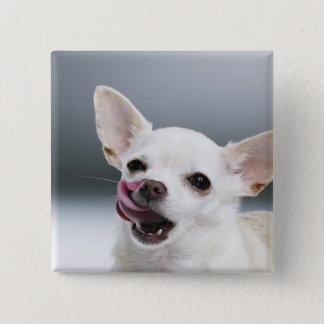 White Chihuahua licking lips Button