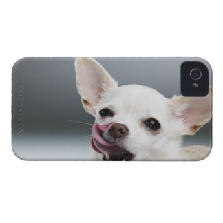 White Chihuahua licking lips iPhone 4 Cover