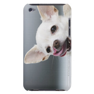 White Chihuahua licking lips iPod Touch Case