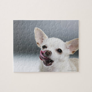 White Chihuahua licking lips Jigsaw Puzzle