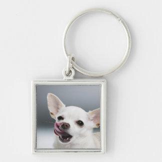 White Chihuahua licking lips Keychain