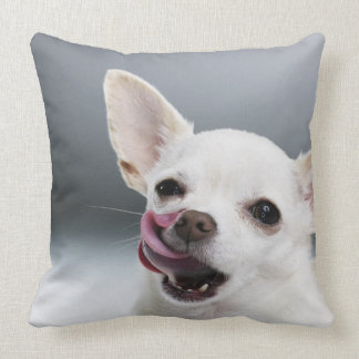 White Chihuahua licking lips Pillow