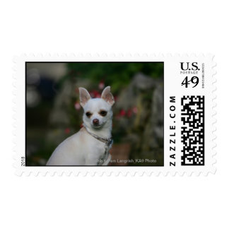 White Chihuahua Postage Stamp