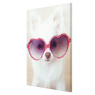 White Chihuahua Puppy Canvas Print