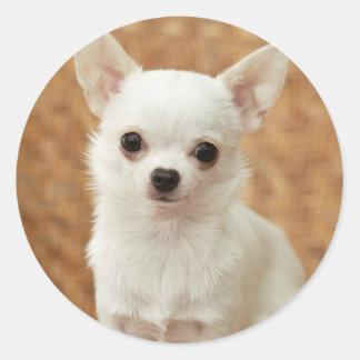 White Chihuahua Round Stickers