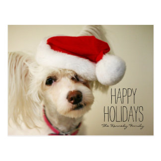 White chinese crested powderpuff dog postcard
