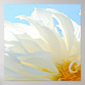 White Chrysanthemum Anti Stress Home Decor Print
