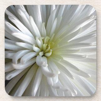 White Chrysanthemum Coaster