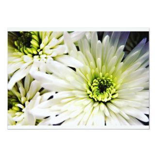 "White Chrysanthemum invitations 5"" X 7"" Invitation Card"