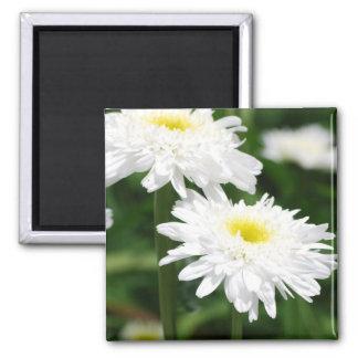 White Chrysanthemums Magnet Fridge Magnet