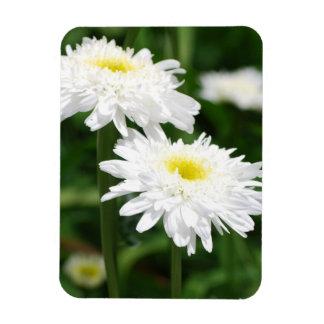 White Chrysanthemums Magnet Magnets