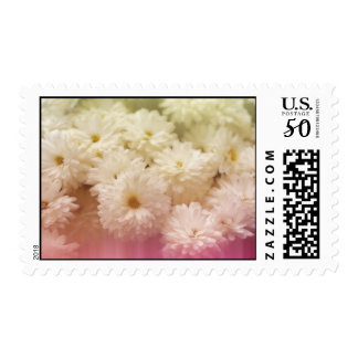 White Chrysanthemums with Pink Light Leaks Postage